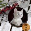 pet-photo-ornament